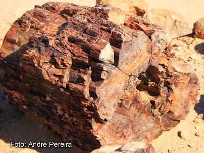 Tronco fossilizado