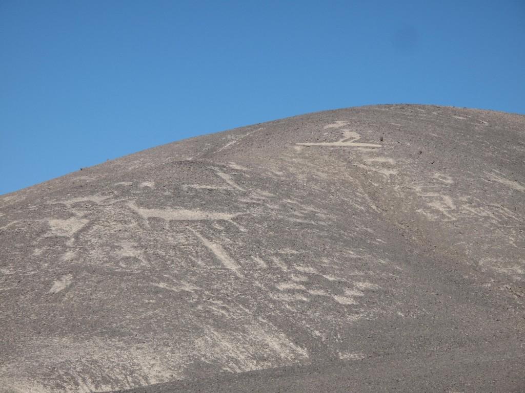 Atacama Erick - (936)